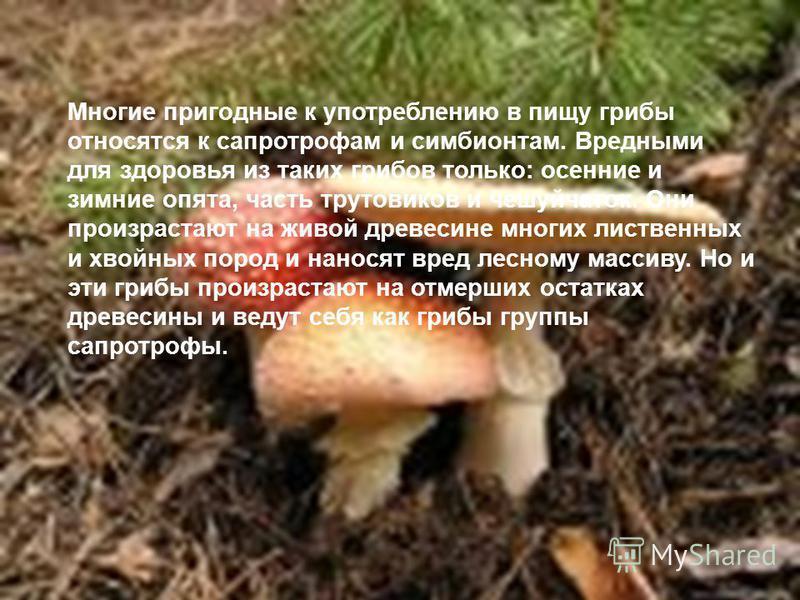 Многие пригодные к употреблению в пищу грибы относятся к сапротрофам и симбионтам. Вредными для здоровья из таких грибов только: осенние и зимние опята, часть трутовиков и чешуйчаток. Они произрастают на живой древесине многих лиственных и хвойных по