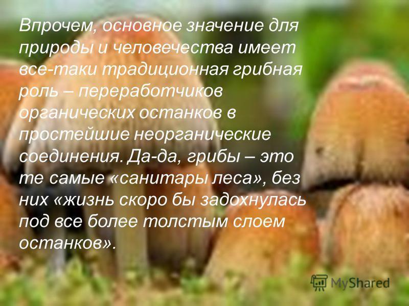 Впрочем, основное значение для природы и человечества имеет все-таки традиционная грибная роль – переработчиков органических останков в простейшие неорганические соединения. Да-да, грибы – это те самые «санитары леса», без них «жизнь скоро бы задохну