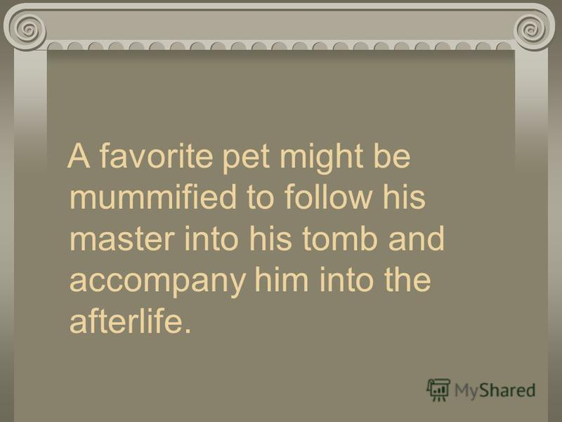 A favorite pet might be mummified to follow his master into his tomb and accompany him into the afterlife.