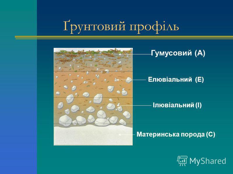 Ґрунтовий профіль Гумусовий (А) Елювіальний (Е) Материнська порода (С) Ілювіальний (І)