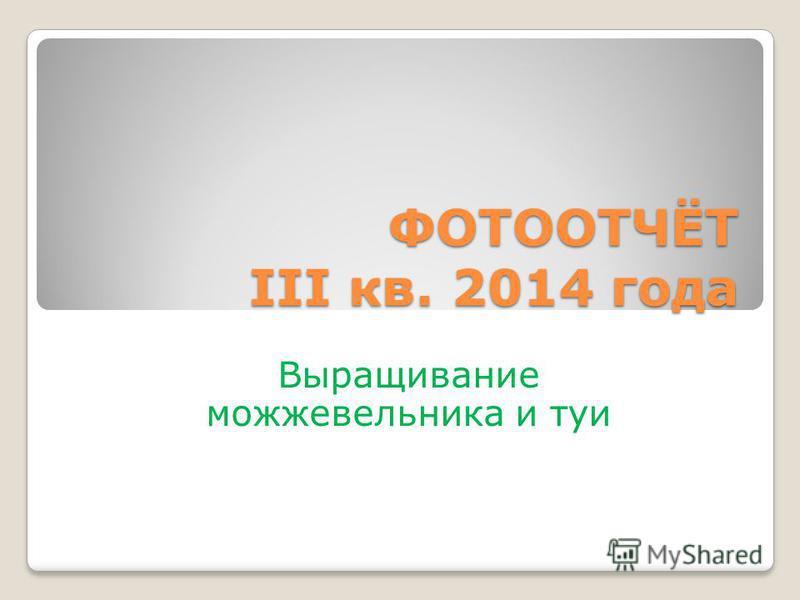 ФОТООТЧЁТ III кв. 2014 года Выращивание можжевельника и туи
