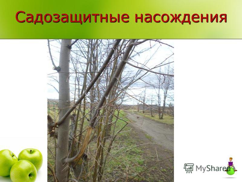 Садозащитные насаждения
