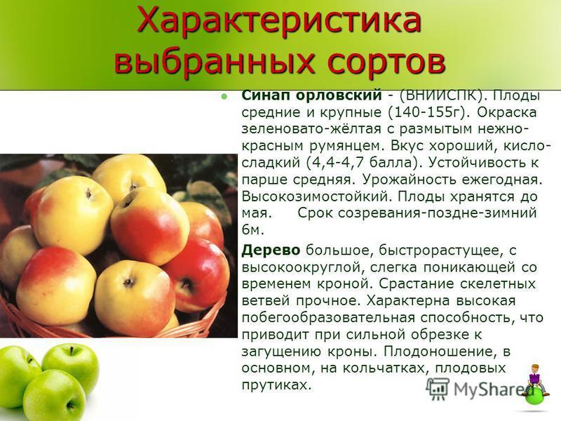 Характеристика выбранных сортов Синап орловский - (ВНИИСПК). Плоды средние и крупные (140-155 г). Окраска зеленовато-жёлтая с размытым нежно- красным румянцем. Вкус хороший, кисло- сладкий (4,4-4,7 балла). Устойчивость к парше средняя. Урожайность еж