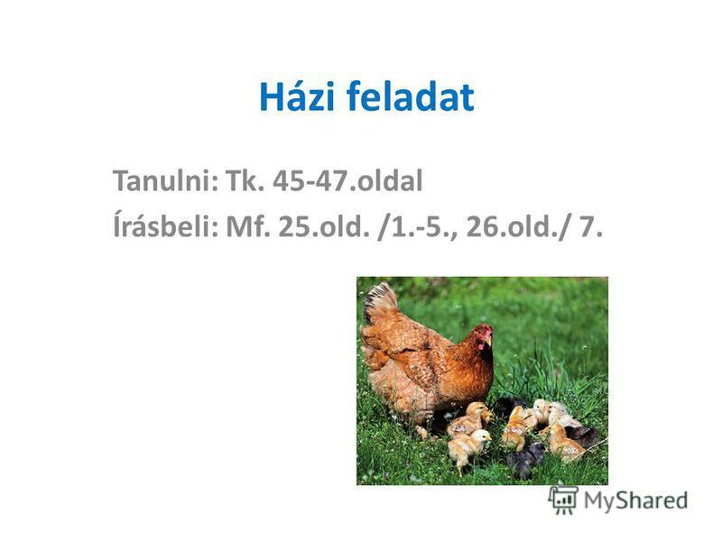 Házi feladat Tanulni: Tk. 45-47.oldal Írásbeli: Mf. 25.old. /1.-5., 26.old./ 7.