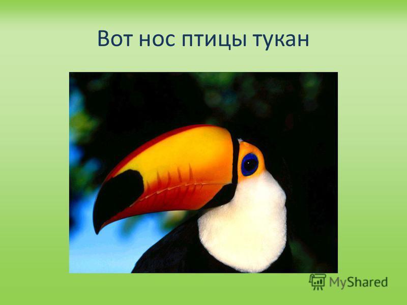 Вот нос птицы тукан