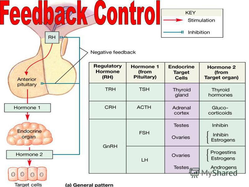 7/26/2015Mehmet KÖYLÜ13 Negative feedback has the effect of returning a condition toward its normal value. If the condition decreases below its normal level, negative feedback acts to increase it. If the condition rises above normal, negative feedbac