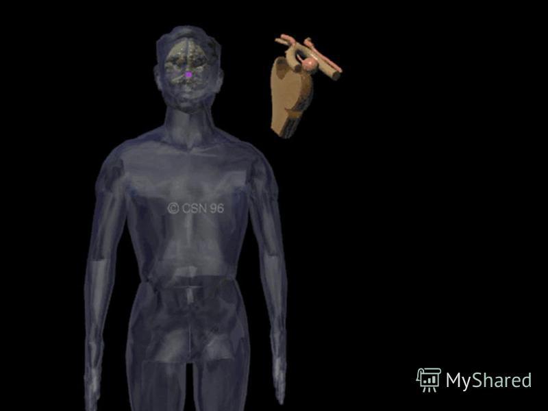 7/26/2015Mehmet KÖYLÜ18 OVARIES TESTES THYMUS EPIPHYSIS ADRENAL INTESTINAL GASTRIC GLANDS