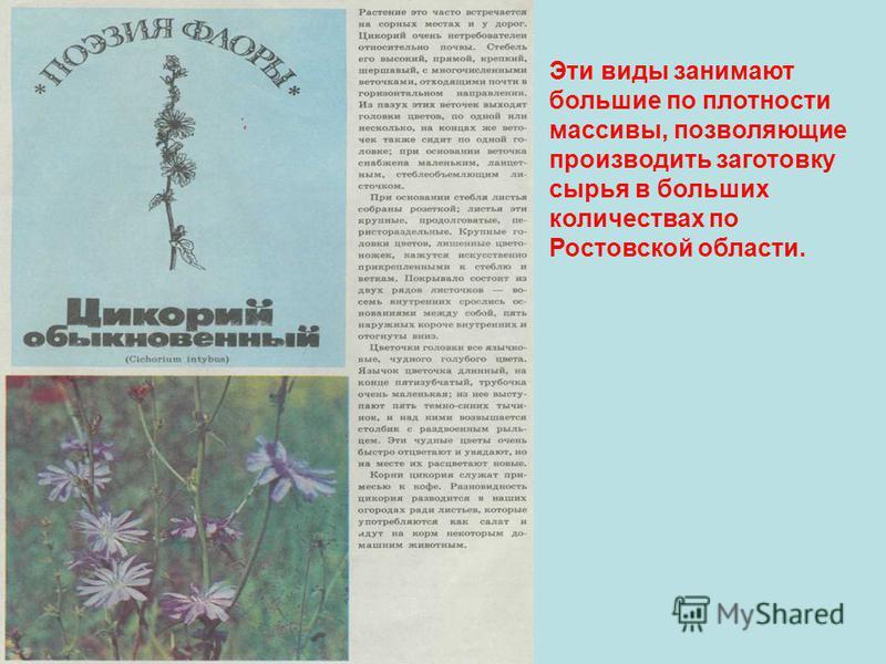 Эти виды занимают большие по плотности массивы, позволяющие производить заготовку сырья в больших количествах по Ростовской области.