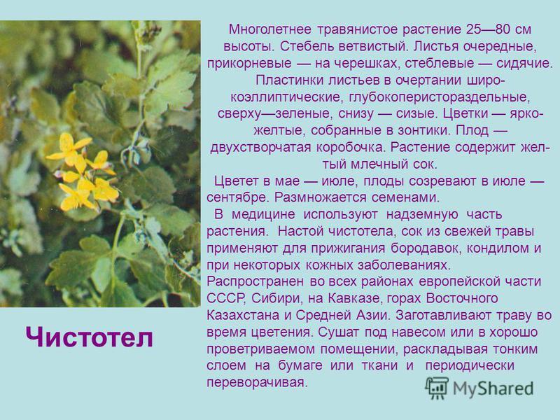 Многолетнее травянистое растение 2580 см высоты. Стебель ветвистый. Листья очередные, прикорневые на черешках, стеблевые сидячие. Пластинки листьев в очертании широ коэллиптические, глубокоперистораздельные, сверхузеленые, снизу сизые. Цветки ярко-