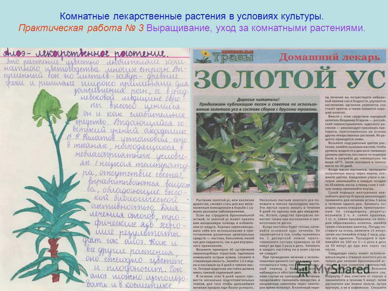 Комнатные лекарственные растения в условиях культуры. Практическая работа 3 Выращивание, уход за комнатными растениями.