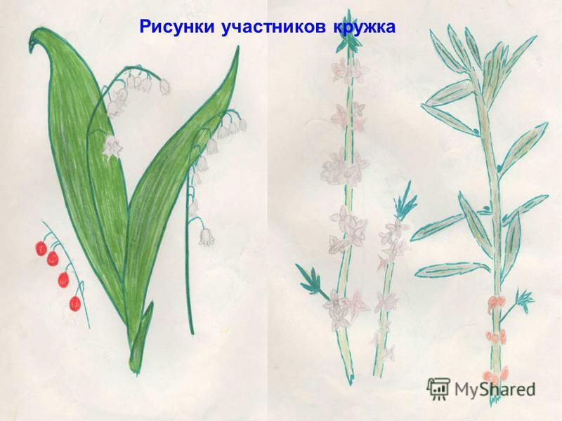 Рисунки участников кружка