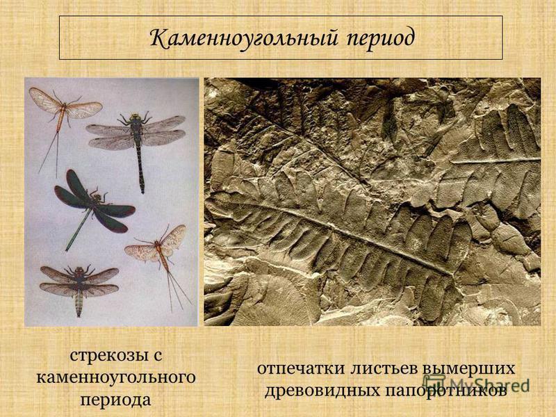 Каменноугольный период отпечатки листьев вымерших древовидных папоротников стрекозы с каменноугольного периода