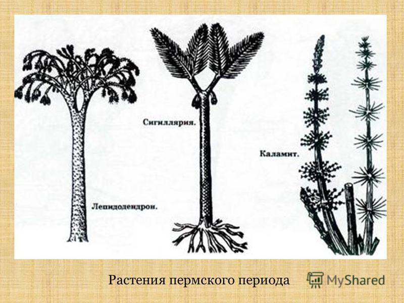 Растения пермского периода