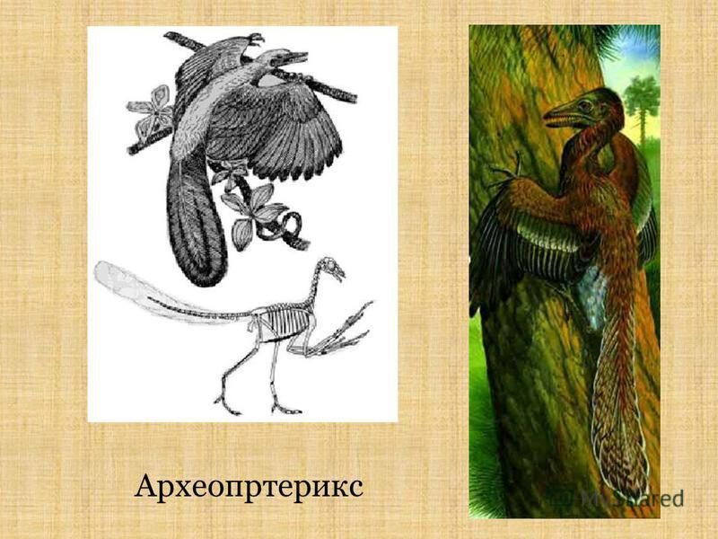 Археопртерикс
