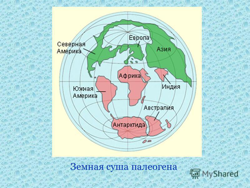Земная суша палеогена