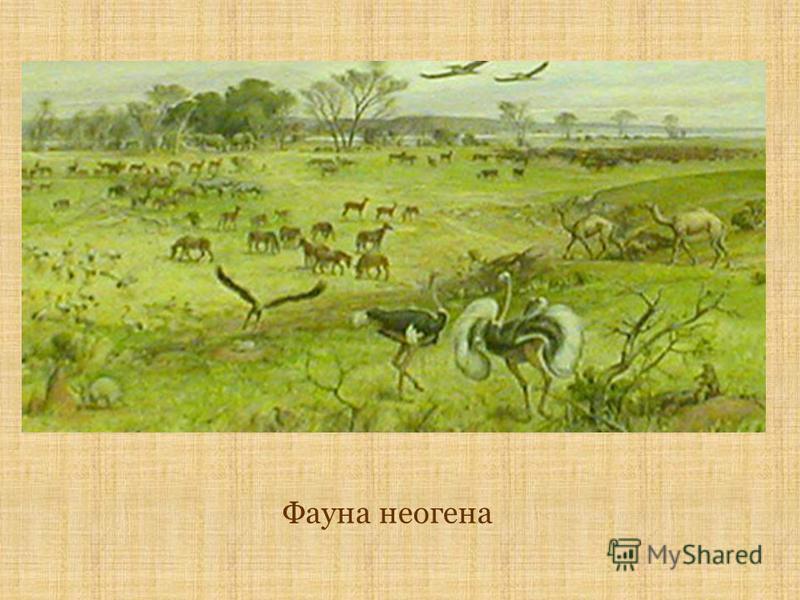 Фауна неогена