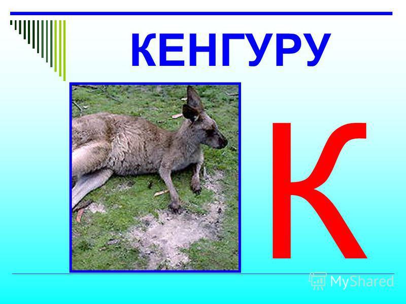 КЕНГУРУ К