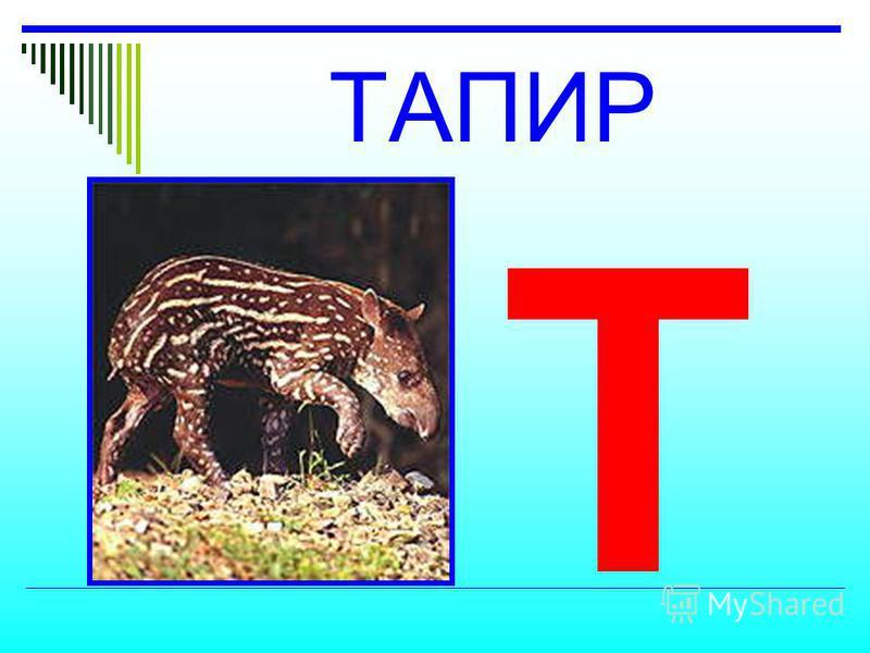 ТАПИР Т