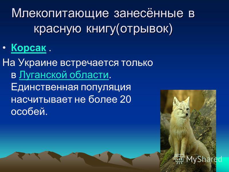 Млекопитающие занесённые в красную книгу(отрывок) Корсак. На Украине встречается только в Луганской области. Единственная популяция насчитывает не более 20 особей.