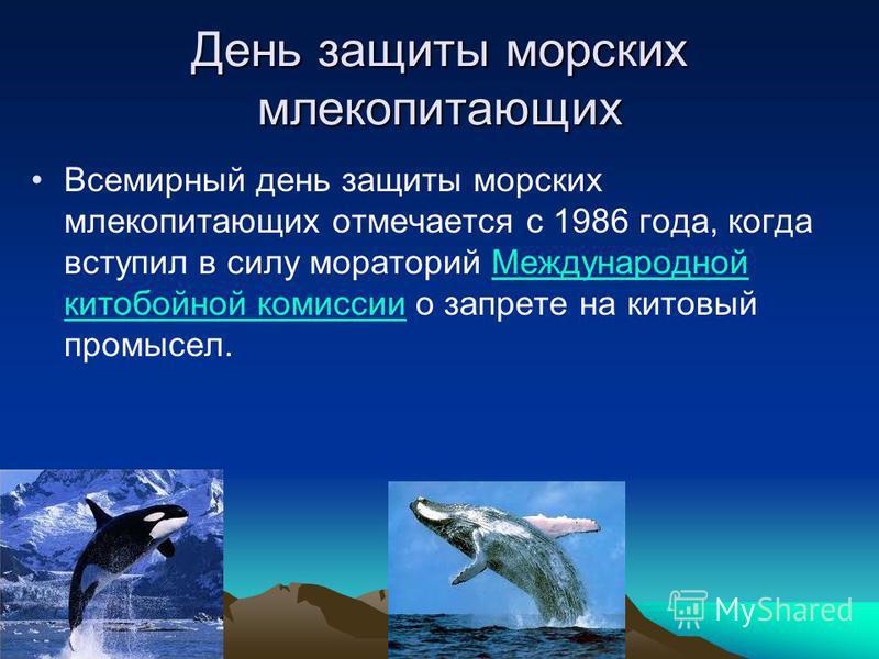 День защиты морских млекопитающих Всемирный день защиты морских млекопитающих отмечается с 1986 года, когда вступил в силу мораторий Международной китобойной комиссии о запрете на китовый промысел.Международной китобойной комиссии