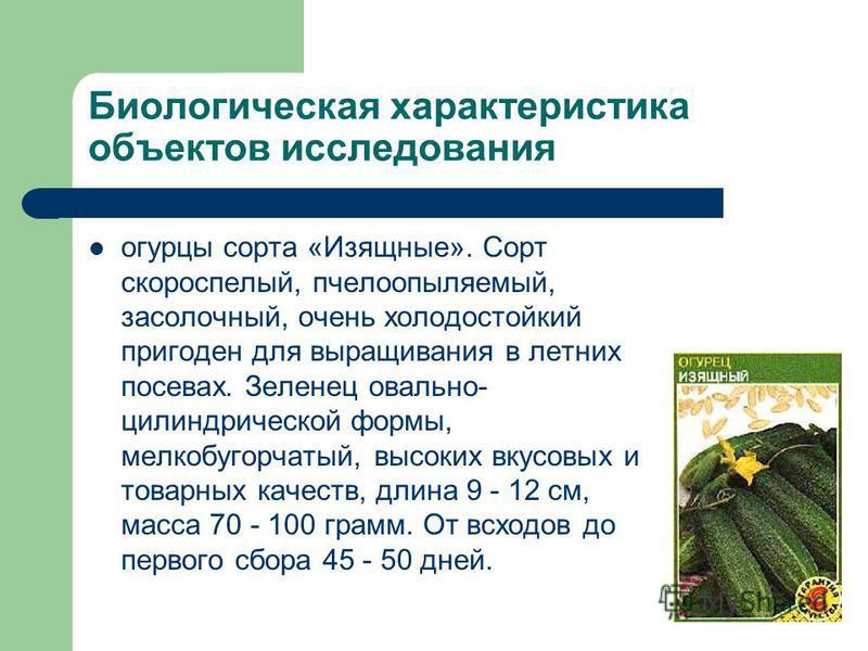 Биологическая характеристика объектов исследования огурцы сорта «Изящные». Сорт скороспелый, пчелоопыляемый, засолочный, очень холодостойкий пригоден для выращивания в летних посевах. Зеленец овально- цилиндрической формы, мелкобугорчатый, высоких вк
