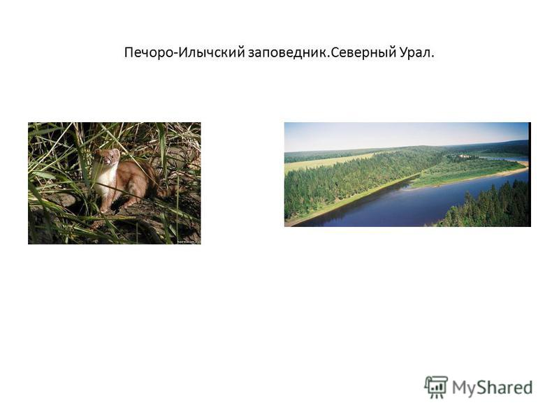 Печоро-Илычский заповедник.Северный Урал.