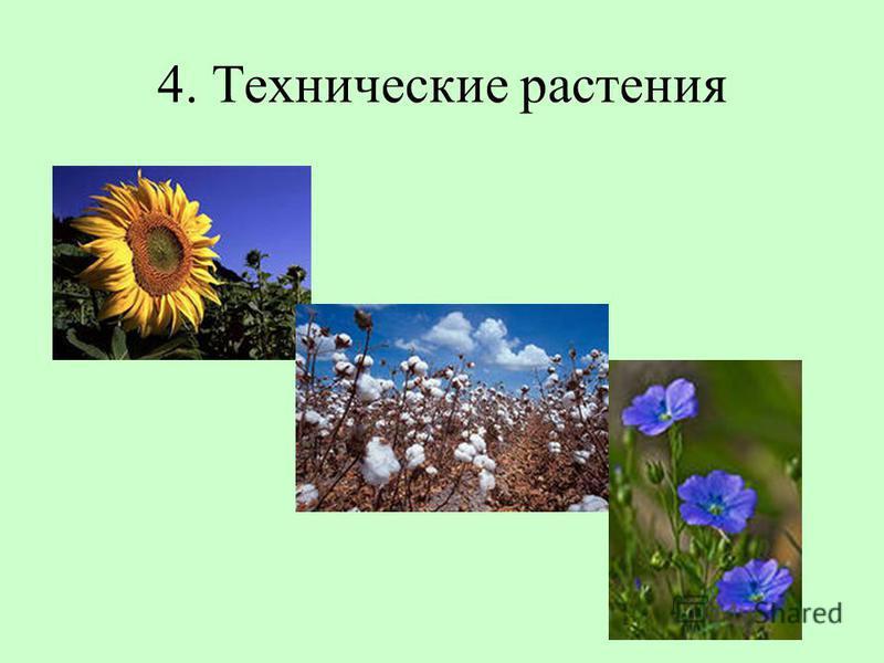 4. Технические растения