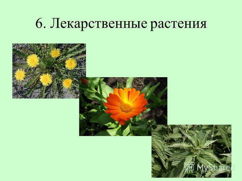 6. Лекарственные растения