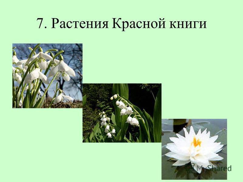 7. Растения Красной книги