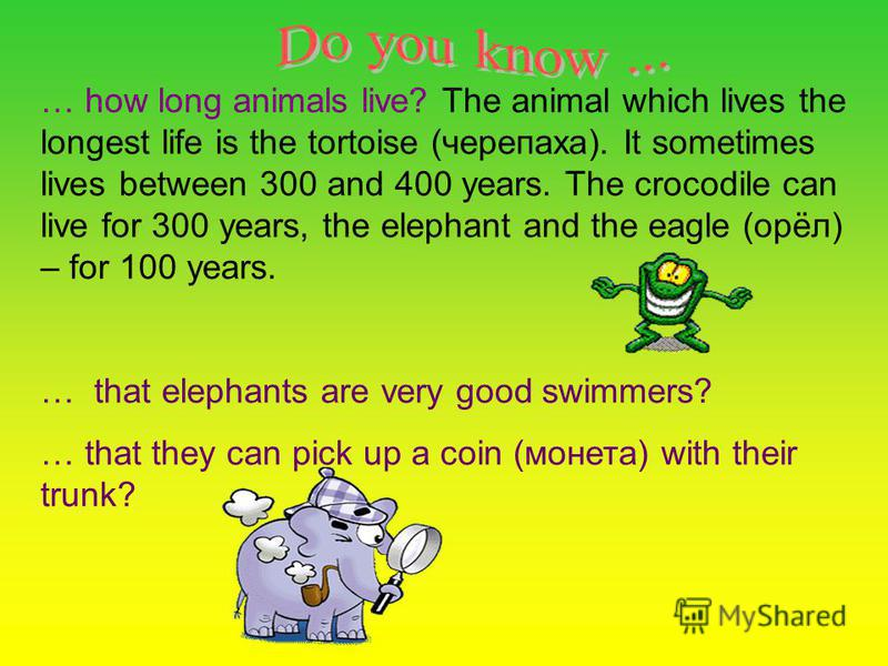 … how long animals live? The animal which lives the longest life is the tortoise (черепаха). It sometimes lives between 300 and 400 years. The crocodile can live for 300 years, the elephant and the eagle (орёл) – for 100 years. … that elephants are v