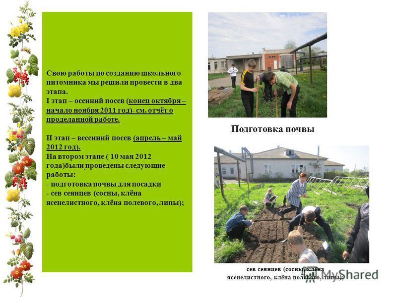 Свою работы по созданию школьного питомника мы решили провести в два этапа. I этап – осенний посев (конец октября – начало ноября 2011 год)- см. отчёт о проделанной работе. II этап – весенний посев (апрель – май 2012 год). На втором этапе ( 10 мая 20