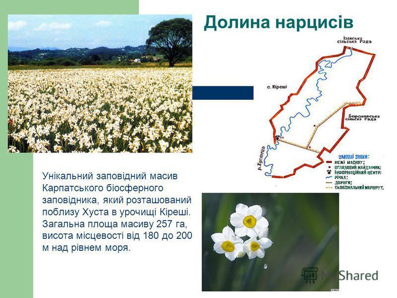 Долина нарцисів Унікальний заповідний масив Карпатського біосферного заповідника, який розташований поблизу Хуста в урочищі Кіреші. Загальна площа масиву 257 га, висота місцевості від 180 до 200 м над рівнем моря.