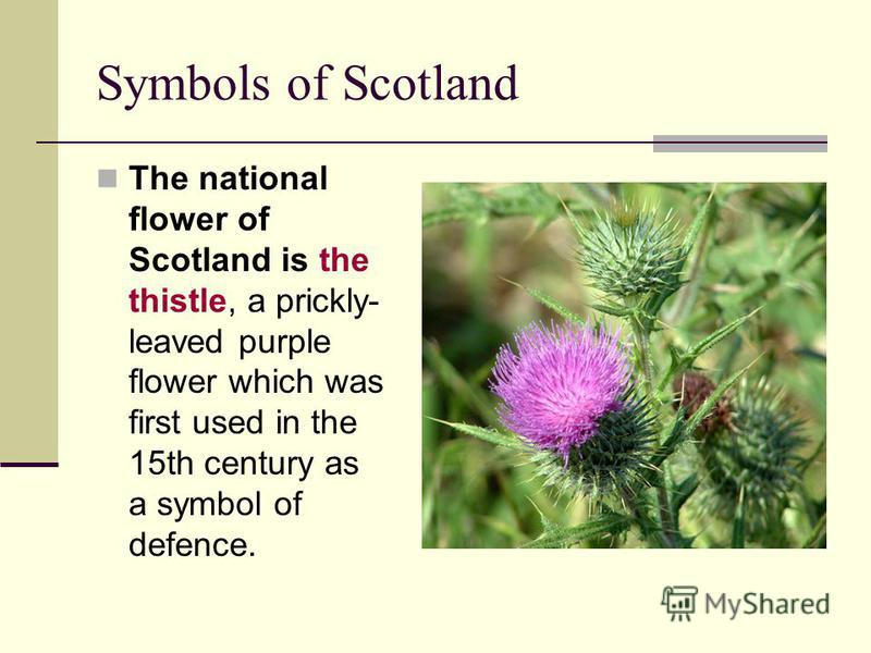 Symbols of Scotland The national flower of Scotland is the thistle, a prickly- leaved purple flower which was first used in the 15th century as a symbol of defence.