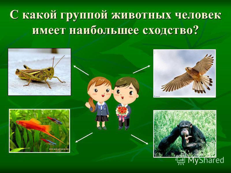 С какой группой животных человек имеет наибольшее сходство?