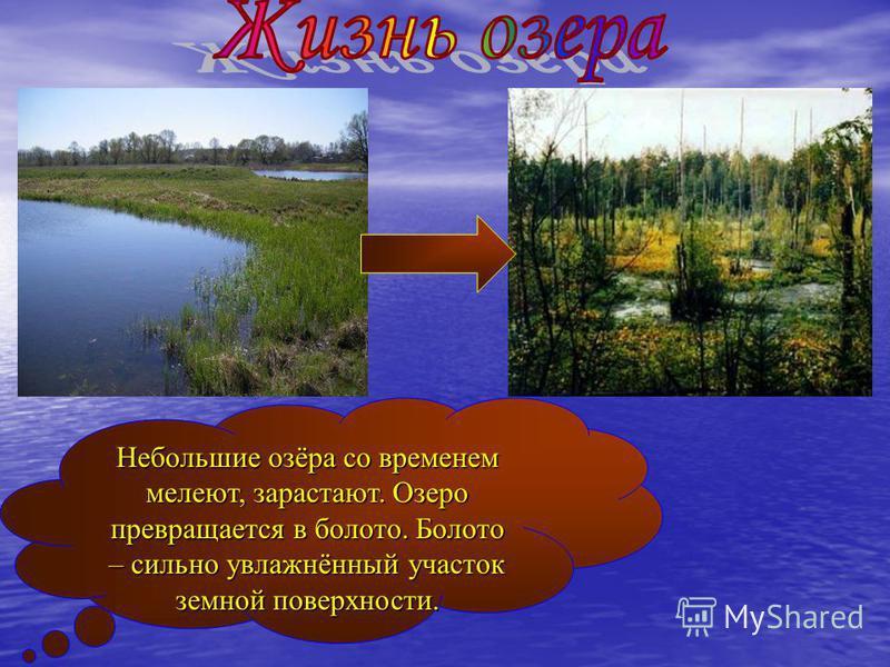 Небольшие озёра со временем мелеют, зарастают. Озеро превращается в болото. Болото – сильно увлажнённый участок земной поверхности.