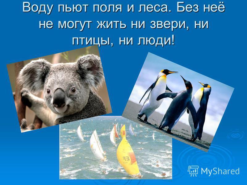 Воду пьют поля и леса. Без неё не могут жить ни звери, ни птицы, ни люди!