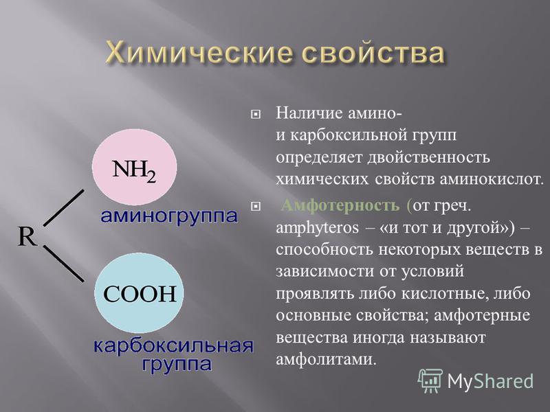 Наличие амино - и карбоксильной групп определяет двойственность химических свойств аминокислот. Амфотерность ( от греч. amph у teros – « и тот и другой ») – способность некоторых веществ в зависимости от условий проявлять либо кислотные, либо основны