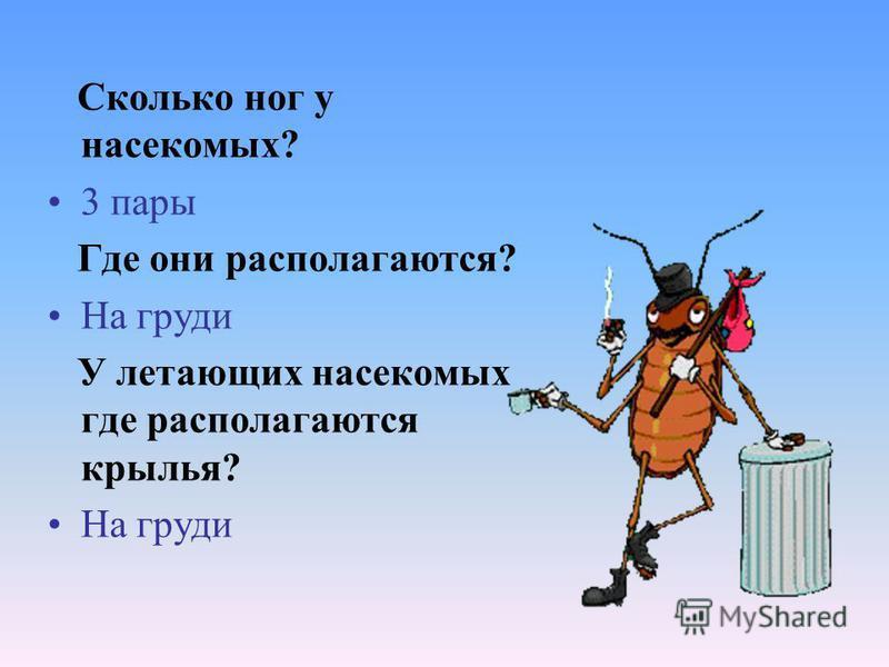 Сколько ног у насекомых? 3 пары Где они располагаются? На груди У летающих насекомых где располагаются крылья? На груди