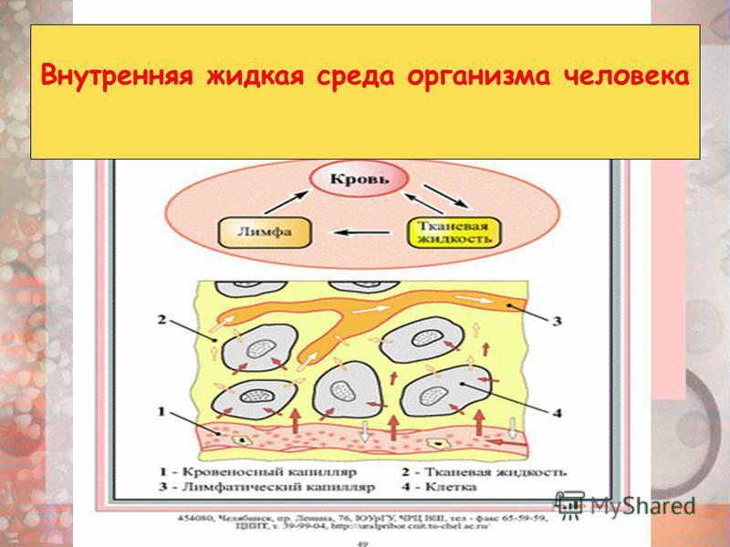 Внутренняя жидкая среда организма человека
