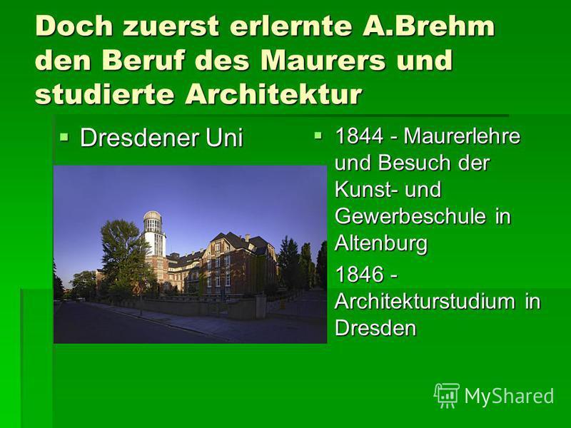 Doch zuerst erlernte A.Brehm den Beruf des Maurers und studierte Architektur Dresdener Uni Dresdener Uni 1844 - Maurerlehre und Besuch der Kunst- und Gewerbeschule in Altenburg 1844 - Maurerlehre und Besuch der Kunst- und Gewerbeschule in Altenburg 1