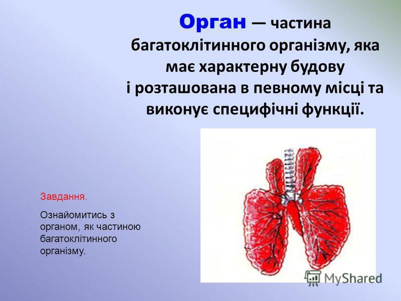 Орган частина багатоклітинного організму, яка має характерну будову і розташована в певному місці та виконує специфічні функції. Завдання. Ознайомитись з органом, як частиною багатоклітинного організму.