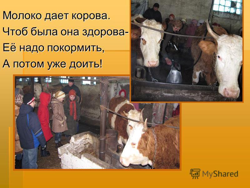 Молоко дает корова. Чтоб была она здорова- Её надо покормить, А потом уже доить!