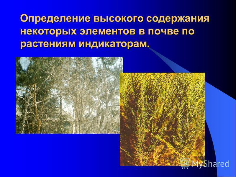 Определение высокого содержания некоторых элементов в почве по растениям индикаторам.