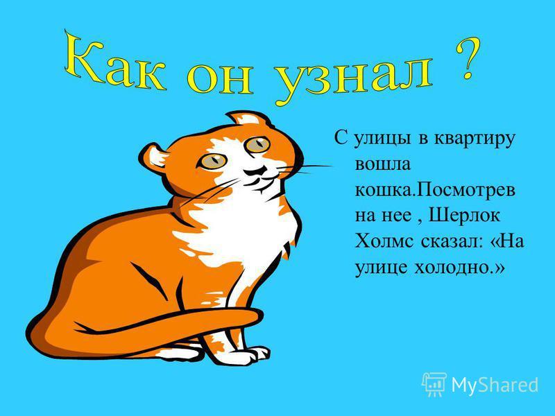 С улицы в квартиру вошла кошка.Посмотрев на нее, Шерлок Холмс сказал: «На улице холодно.»