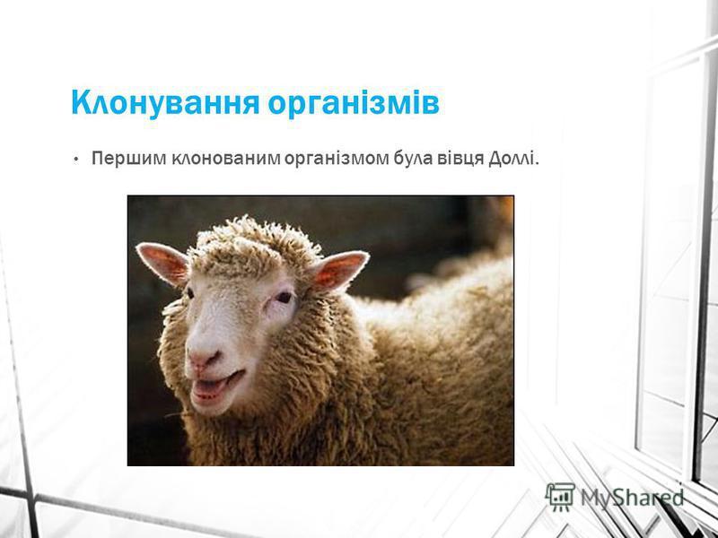 Клонування організмів Першим клонованим організмом була вівця Доллі.