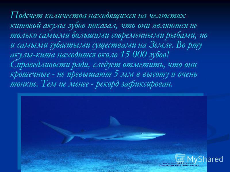 Подсчет количества находящихся на челюстях китовой акулы зубов показал, что они являются не только самыми большими современными рыбами, но и самыми зубастыми существами на Земле. Во рту акулы-кита находится около 15 000 зубов! Справедливости ради, сл