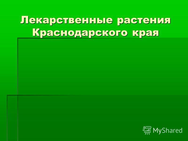 Лекарственные растения Краснодарского края