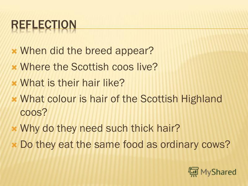 When did the breed appear? Where the Scottish coos live? What is their hair like? What colour is hair of the Scottish Highland coos? Why do they need such thick hair? Do they eat the same food as ordinary cows?