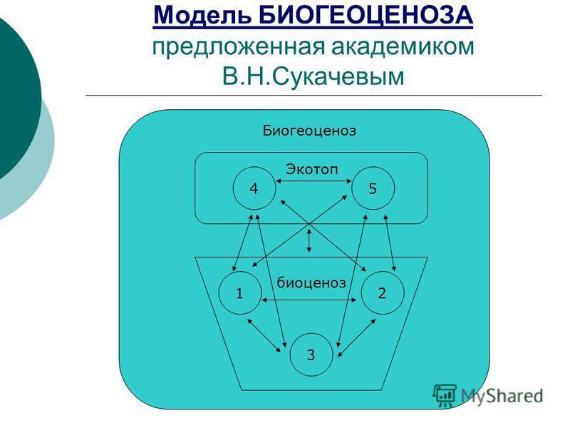Модель БИОГЕОЦЕНОЗА предложенная академиком В.Н.Сукачевым 45 12 3 Биогеоценоз Экотоп биоценоз