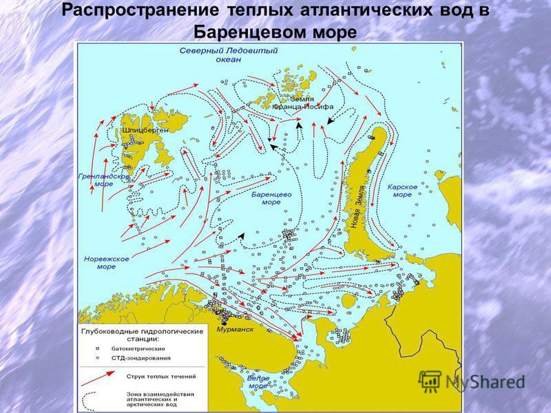 Распространение теплых атлантических вод в Баренцевом море